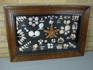 Vintage shadow box of seashells